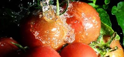pomodoro acqua